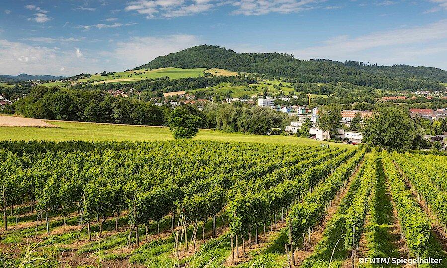 Schwarzwald & badischer Wein – Schwarzwald Weinberg