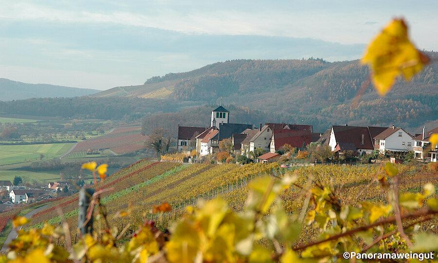 Schwarzwald & badischer Wein – Panoramaweingut Überblick Weingut