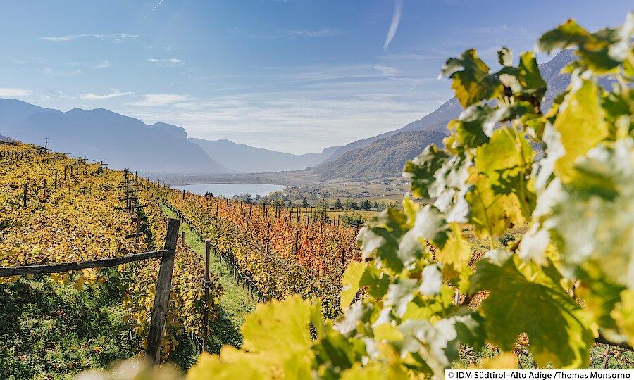 Land der Kirchen, Klöster & Burgen – Südtirol Weinberge am Kalterer See